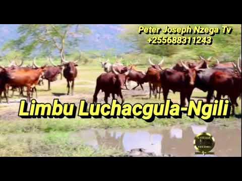 Download Limbu Luchagula-Ngili 2021