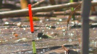 Рыбалка . Ловля карася на поплавочную удочку с пружинкой в камышах [весной]. My fishing