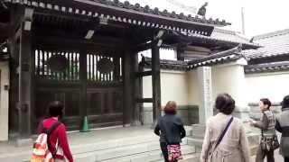 イチョウの木&千蔵院