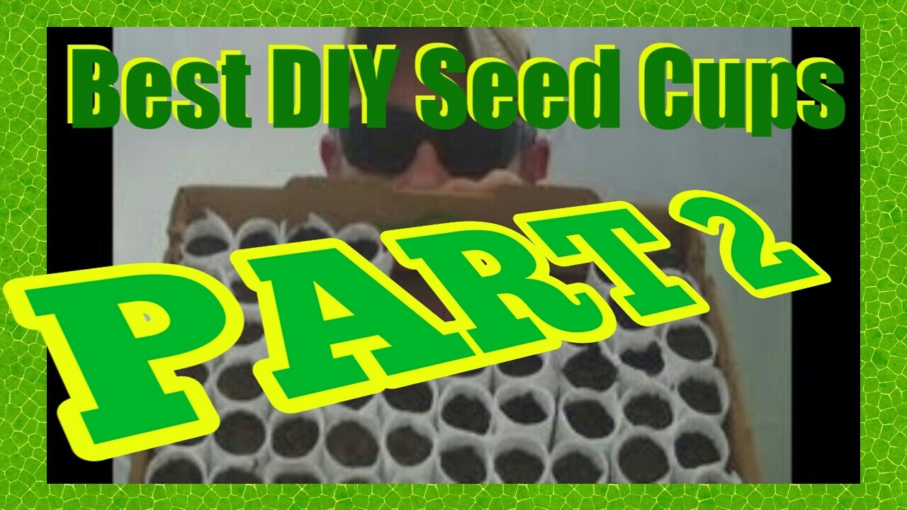 THE BEST DIY BIODEGRADABLE SEED CUPS PART 2 - YouTube