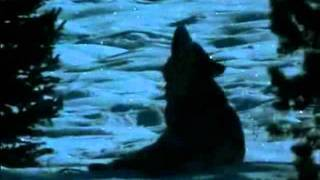 Wolves - My Immortal