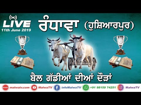 RANDHAWA (Hoshiarpur) OX RACES [11th-June-2019] 🔴 LIVE STREAMED VIDEO