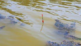 ЭТОТ КАРАСЬ ГНЁТ УДОЧКУ Ловля карася на маховую удочку Рыбалка на карася Ловим на фидер