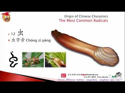 Silkworm was my pet in school, can make girls screaming!  Chinese Radical # 12 虫 虫字旁 Insect