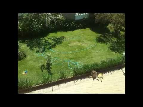 Come creare un laghetto in giardino fai da te youtube for Laghetto giardino fai da te