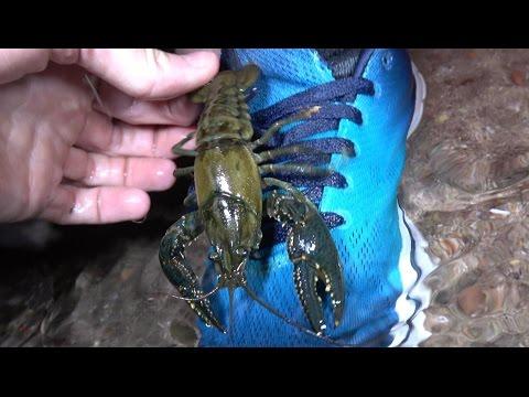 4K CRAWDAD Rock-Paper-Scissors. Fishing, Herping, Chasing Snakes & Lizards CA AZ NV NM TX FL.