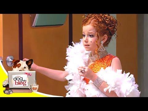 Собака точка ком - У Стэна появляются щенки - часть 1 и 2 - премиальный эпизод | Сериал Disney