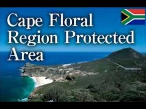Cape Floral