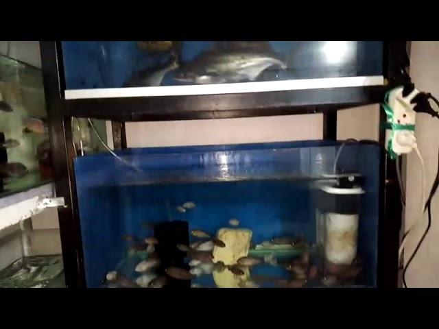 Akvaryum Köpek Balığı / Shark in The Aquarium