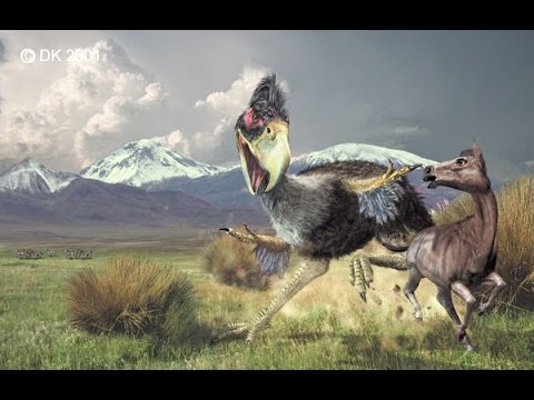 Top Depredadores Prehistóricos (AVES) aves del terror
