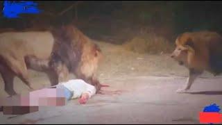 الحياة البرية إفتراس الحيوانات للبشر مرعب جدا animals eating the human
