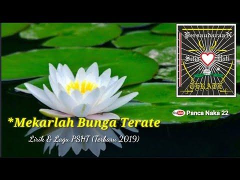 MEKARLAH BUNGA TERATE   LIRIK DAN LAGU PSHT (terbaru 2019)