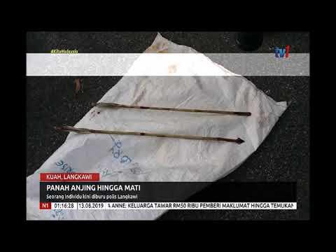 N1 – PANAH ANJING HINGGA MATI – SEORANG INDIVIDU KINI DIBURU POLIS LANGKAWI [13 OGOS 2019]