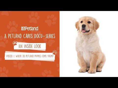 Petland - An Inside Look - Mini Docu-series Episode 1: Where Do Petland Puppies Come From? (2019)