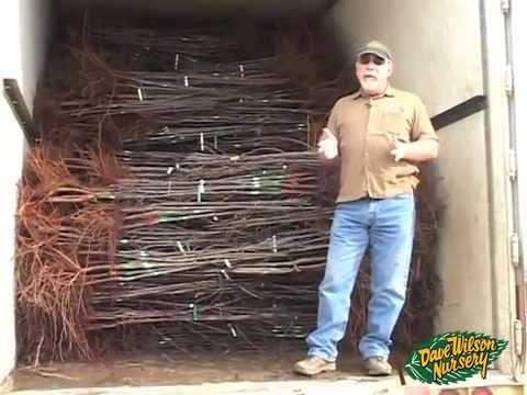 Bare Root Fruit Tree Tour Dave Wilson Nursery