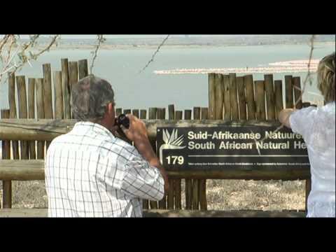 Thousand of Flamingos have returned to Kamfersdam outside Kimberley