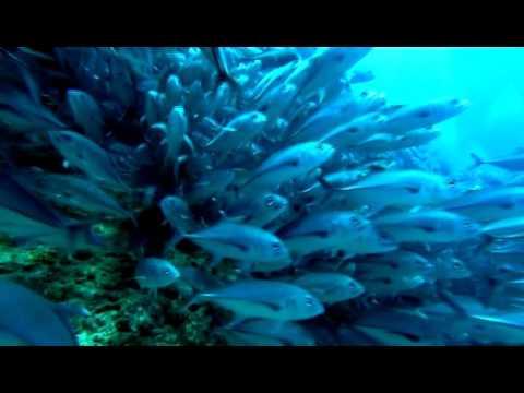 Diving in Okinawa, Japan
