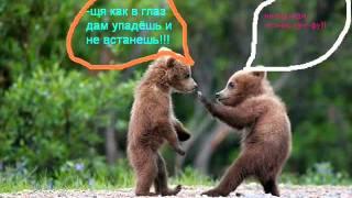 приколы про животных в фото.wmv