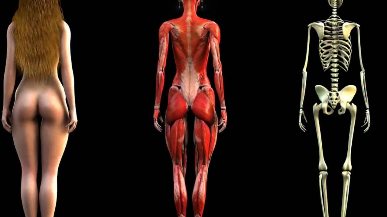 woman anatomy video image collections - learn human anatomy image, Human Body