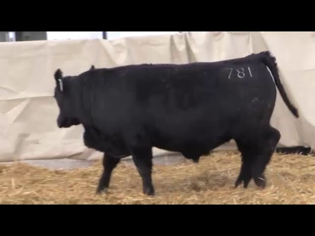 Marcy Cattle Company Lot 39