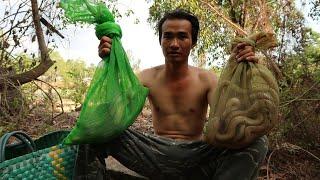 Võ Minh Phụng : Bẫy Rắn Trúng Hàng Nóng