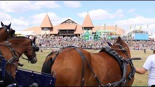 Marché-Concours national de chevaux Franches-Montagnes, à Saignelégier (CH)