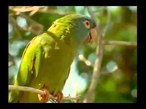 Connor - Wild Parrots of Telegraph Hill