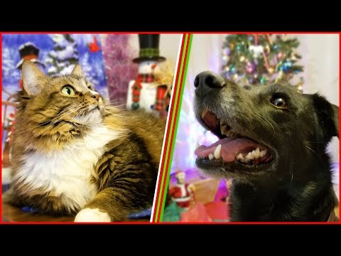 Christmas Present Surprise with Cats & Dog ! Holiday Giveaway