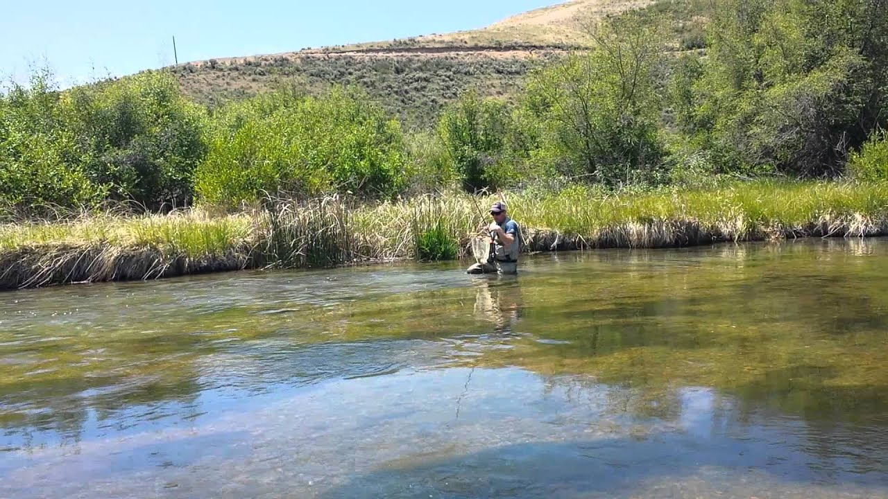 Catching a fish at silver creek youtube for Silver creek fishing report