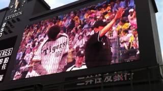 5月16日(水)に阪神甲子園球場で北海道日本ハムファイターズ戦の試合前...