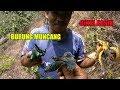 Pikat Burung Kolibri Wulung Muncang Dapat Banyak Menggunakan Ngriwik(.mp3 .mp4) Mp3 - Mp4 Download