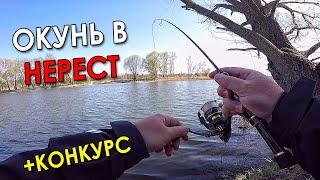 НА ТАКУЮ СНАСТЬ ПОЙМАЮ ВЕЗДЕ Рыбалка на спиннинг 2021 Ловля окуня и щуки весной в нерест КОНКУРС