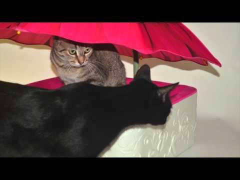 Parasol Pets, llc