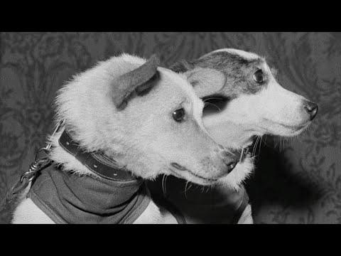 Almanac: Soviet space dogs