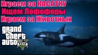 GTA 5 - Играем за КИТА-КАСАТКУ [Играем за Животных и Ищем Лофофоры]