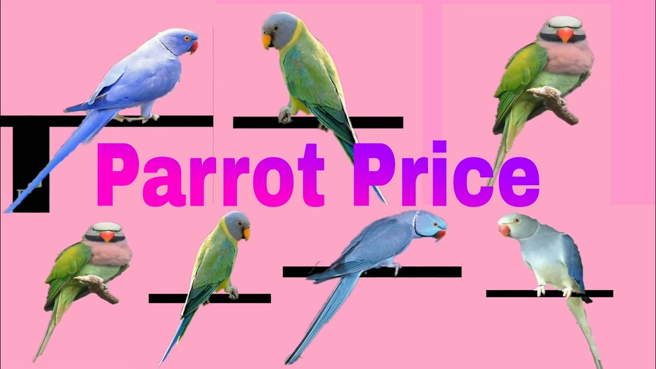 Top 11 type of Parrot Price 2019
