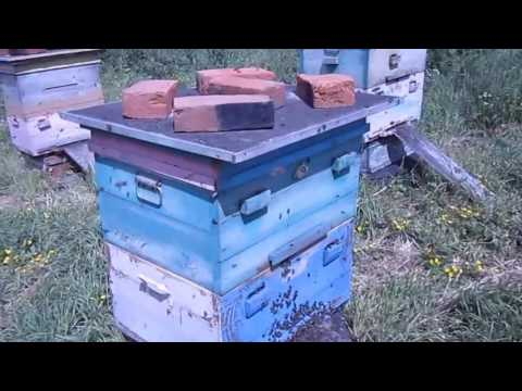 Роение пчел на пасеке 6