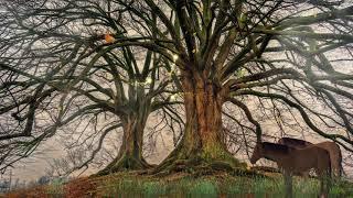 Kahl Tree