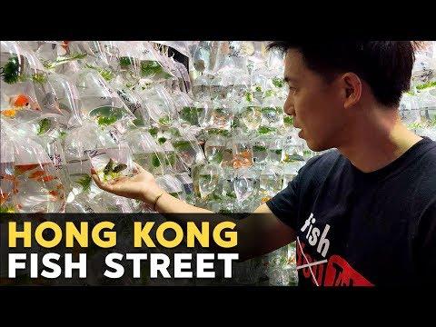 $250-gem-tang?!-gold-fish-street-in-hong-kong!!-金魚街