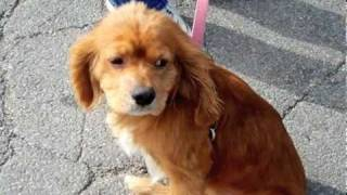 Wanted: A Forever Home For Alex