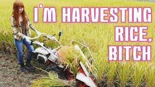 HARVESTING RICE お米の収穫