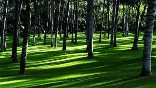 Nature sounds - summer wind blowing through a forest