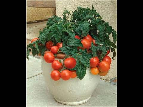 10 plantas ornamentales venenosas youtube for Plantines ornamentales