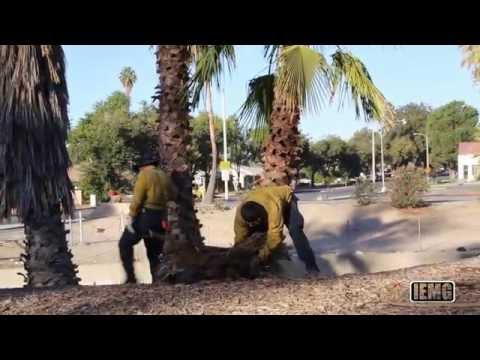 City of San Bernardino #FightBlight