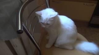 Кс-сс или рука против кота