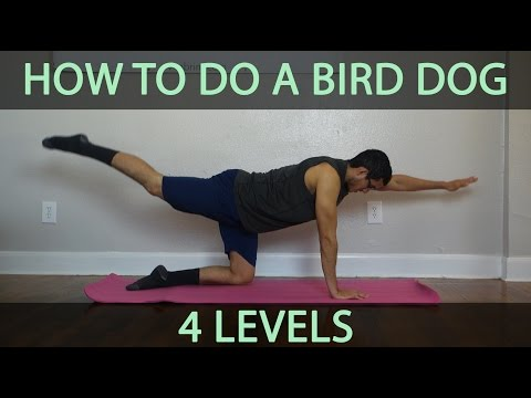 How To Do A Bird Dog (Core Exercise) - Level 1, 2, 3, And 4