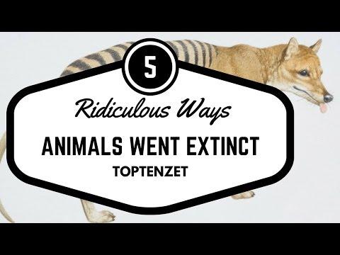 5 Ridiculously Stupid Ways Animals Went Extinct