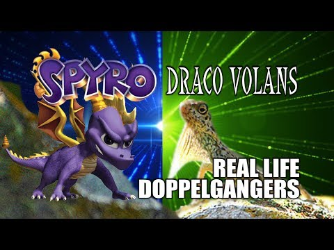Spyro In Real Life: Draco Volans  l  Gaming Doppelgangers IRL