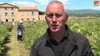 بالفيديو.. اكتشف موطن استخلاص العطور في فرنسا