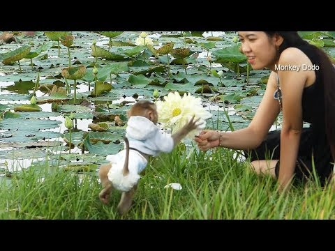 Wow Nice Dodo Destroy Lotus Flower That Mama Give Him